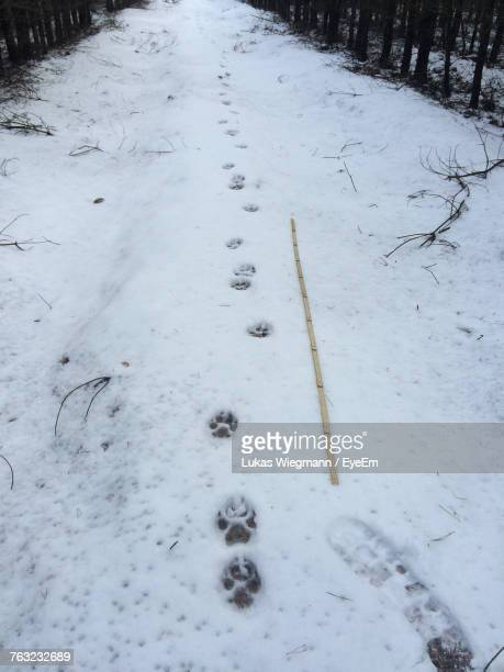 Footprints On Snow Covered Field