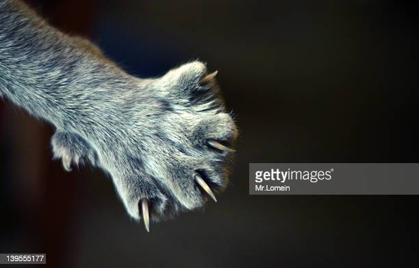 For cat with claws
