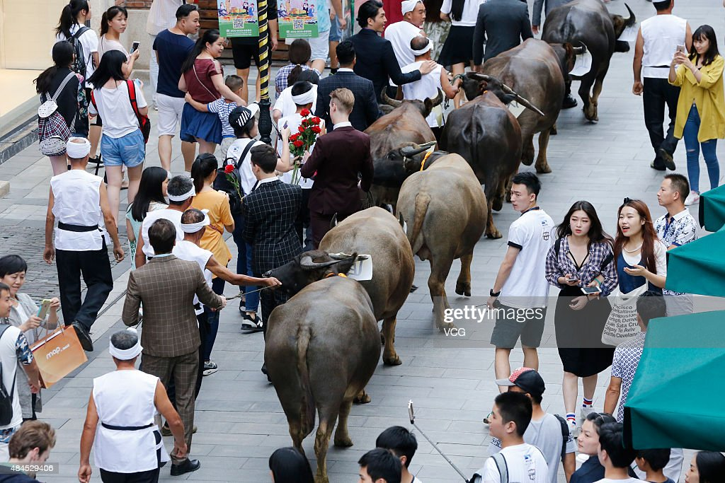 Foreign handsome men haul cows while wooing for lovers on Han Street the day before Chinese traditional Qixi Festival on August 19 2015 in Wuhan...