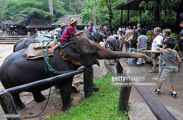 Foreign tourists play with elephants at Mae Sa elephant camp in Chiang Mai province on August 3 2010 Kasikorn Research Center forecasts that tourist...
