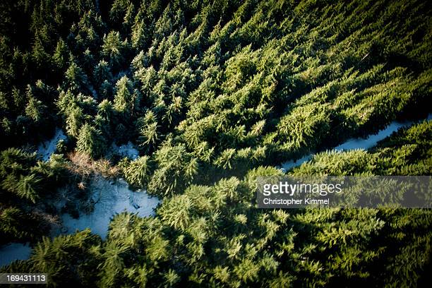 Forest Aerial