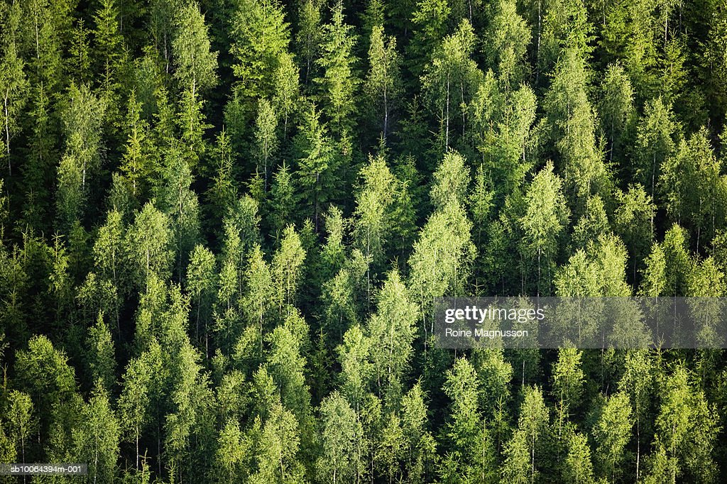 Forest, aerial view : Stock Photo