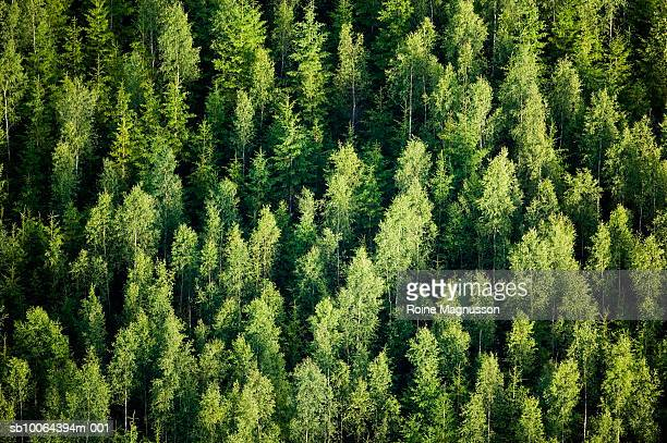 Forest, aerial view