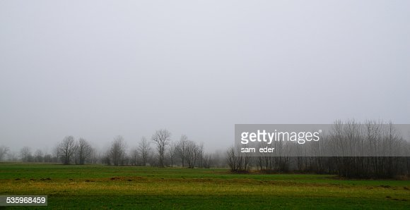 forest and meadow in the winter : Stock Photo