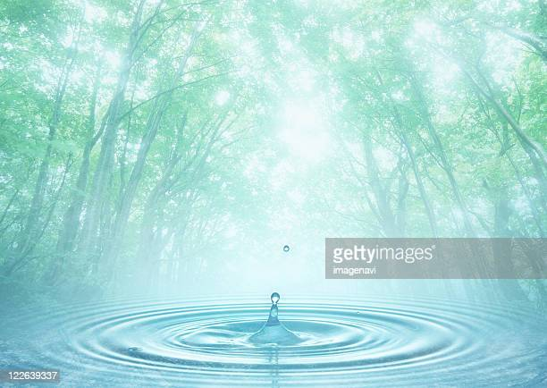 Forest and rippling water