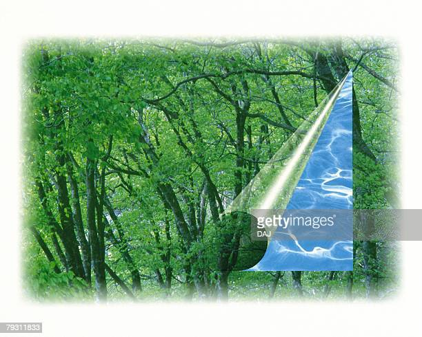 Forest and Water Surface, High angle view, Composite
