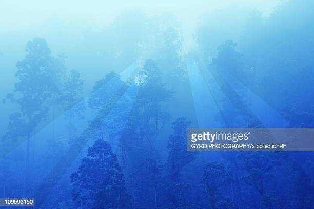 Forest at dawn, Mie Prefecture, Honshu, Japan