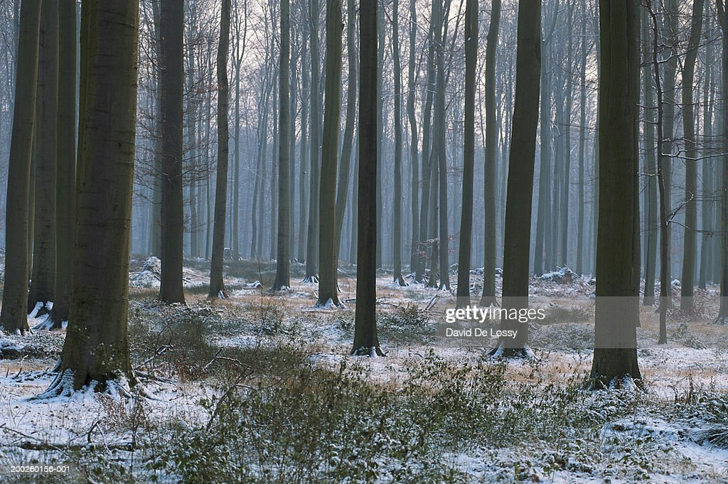 Forest at mist