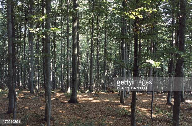 Forest at Mount Lusen Bavarian Forest National Park Bavaria Germany