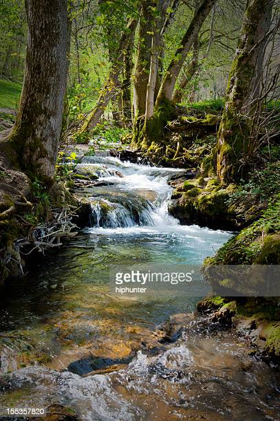 Forest at summertime with creek little cascades lush foliage