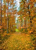 Autumn landscape on the Polish Masuria.