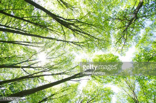 forest background : Stock Photo