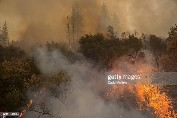 Forest burns near Mountain Ranch Road at the Butte Fire on September 13 2015 near San Andreas California California governor Jerry Brown has declared...