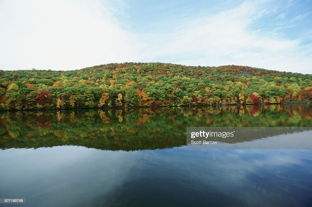 Forest by a lake : Stockfoto