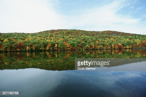 Forest by a lake : Stock-Foto