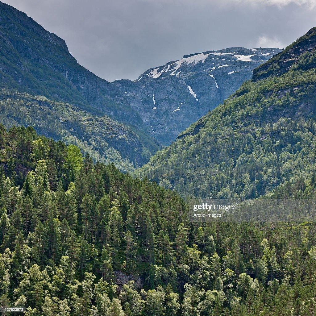 Forest by Steinsdalsfossen, Norway : Stock Photo