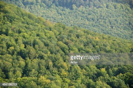Floresta cobertura como vista de cima : Foto de stock