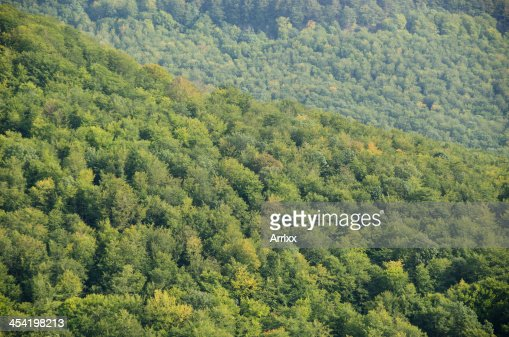 Bosque canopy visto desde arriba : Foto de stock