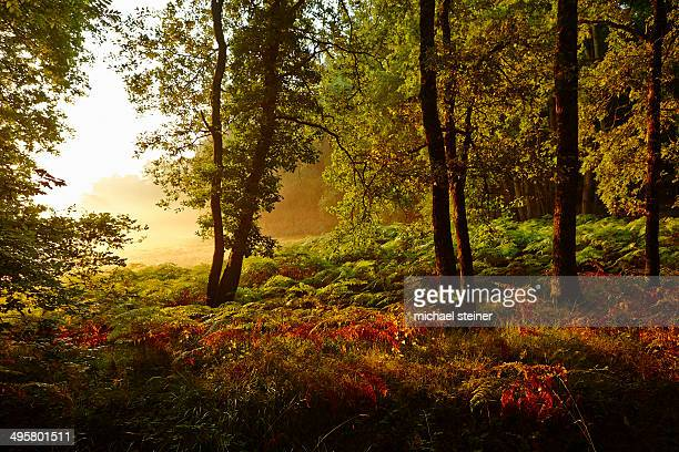 Forest clearing in the early morning light, Montagnac-la-Crempse, Bergerac, Departement Dordogne, Aquitaine, France