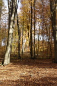 Forest Compiegne Forest In AutumnPicardy France