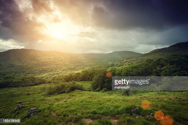 Les montagnes couvertes de forêt au lever du soleil