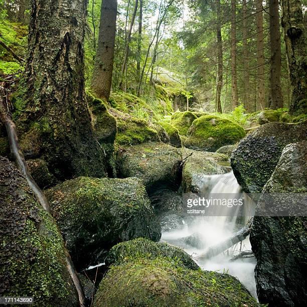 Forest Creek Scandinavia