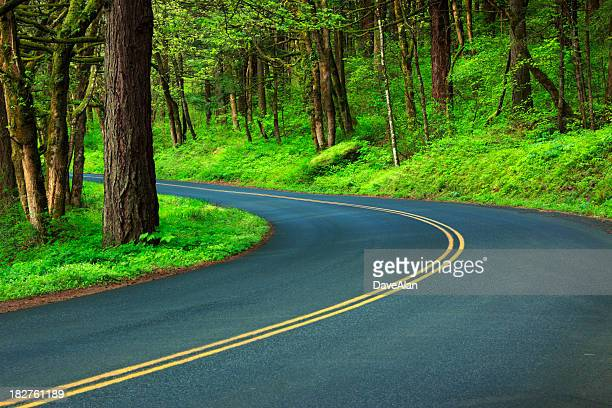 Forest Curve Road.