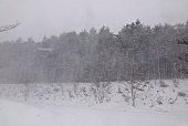 Forest during snow storm, Fukushima Prefecture, Honshu, Japan