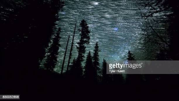 Forest Edge Night Sky Star Trails Over Oregon