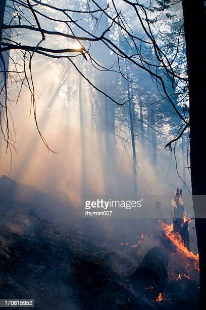 Forest Fire - 2