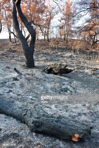 forest fire ashes, outdoor Foto Schönheit in der Natur
