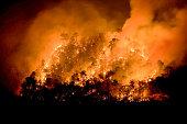 Forest Fire/Fire Mountain