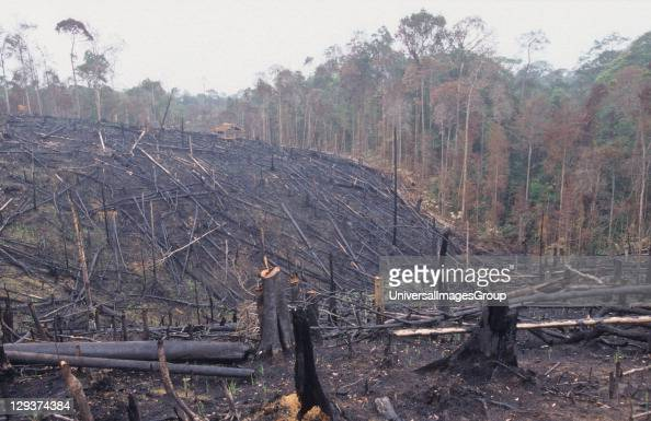 Forest Fires Indonesia Sumatra Nr Bukit Tigapuluh 11/97 Burning The Rainforest To Clear Land For Oil Palm Plantations