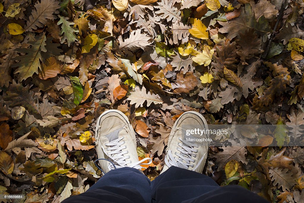Forest floor with dry leaves in autumn. Personal perspective. : Stock Photo