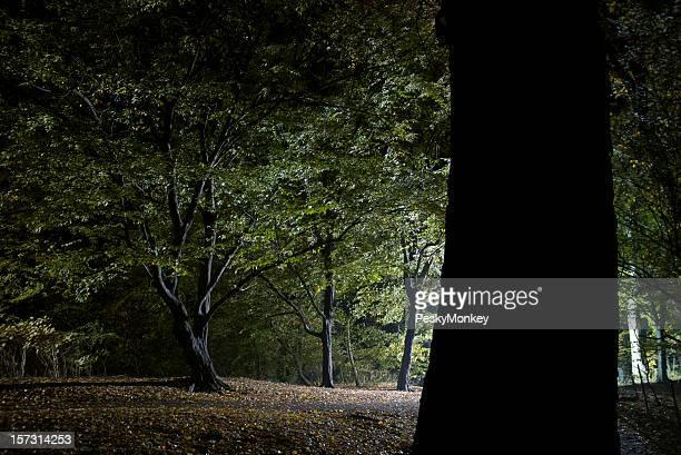 Foresta di alberi di luce Mongolfiera di notte