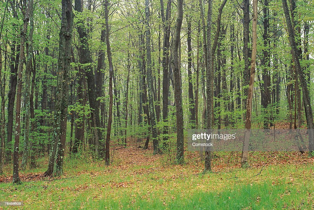 Forest in Bucks County , Pennsylvania