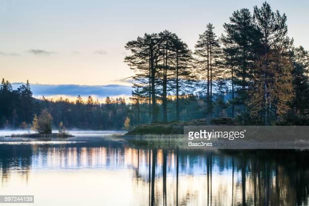 Forest in Drammen, Norway