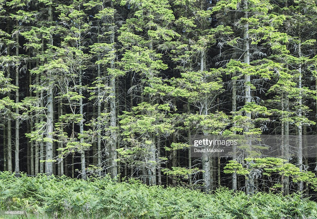 Forest in Lake District, England : Stock Photo