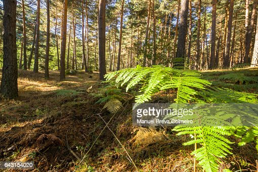 Forest in madrid stock photo getty images - Madrid forest ...