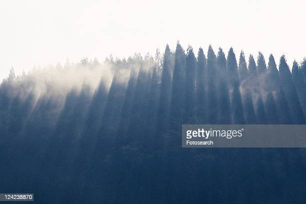 Forest in the Fog, Low Angle View, Pan Focus