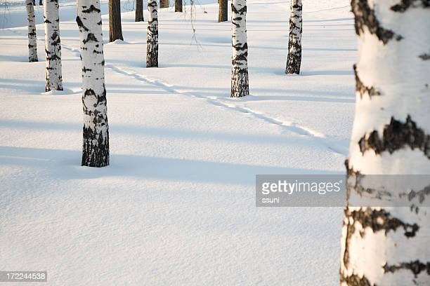 Forest in the winter with snow on the ground