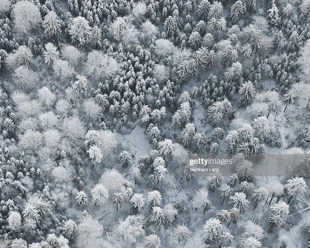 Forest in winter, aerial view : Stock Photo