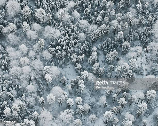 Forest in winter, aerial view
