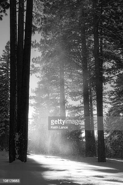 森林の冬、ブラックおよびホワイト