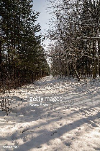 Floresta no Inverno : Foto de stock