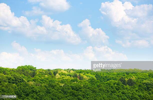 Forest landscape with beautiful scenic clouds overlooking it