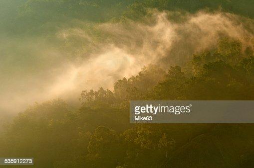 Bosque de la luz. : Foto de stock