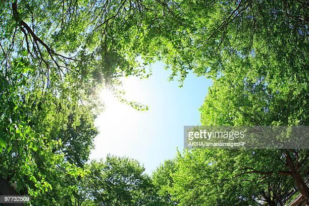 Forest, Low angle view, Setagaya ward, Tokyo Prefecture, Honshu, Japan