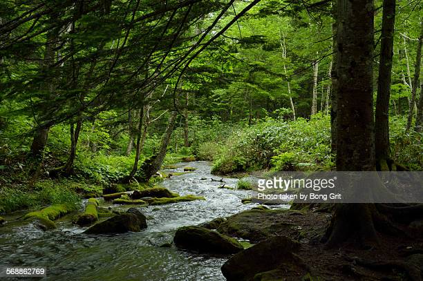 Forest mountain stream