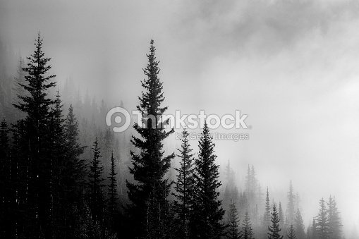 Forest Mountain Valley : Foto de stock
